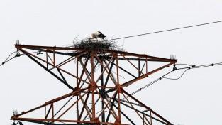 자연둥지에서 첫 번식한 황새(천연기념물)가족 무사히 둥지 떠나
